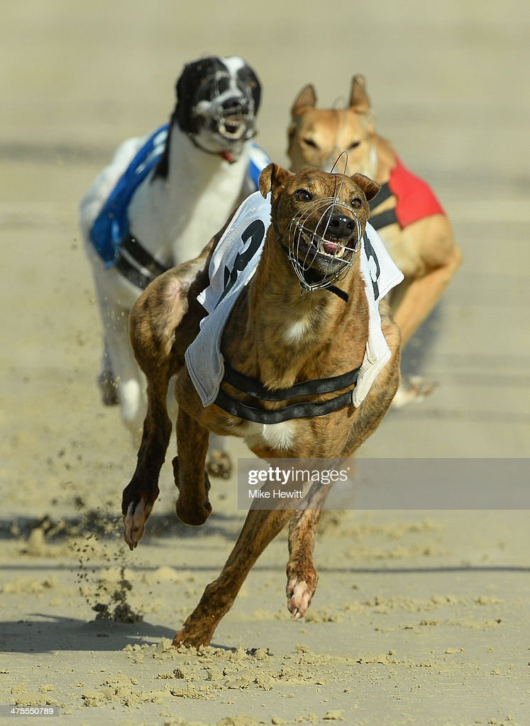 That's Rich in action during the second race at the Coral Brighton and Hove Greyhound stadium on February 28, 2014 in Brighton, England.