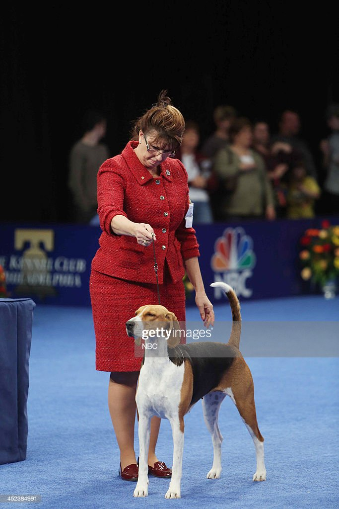 PURINA 'The 12th Annual Nation Dog Show Presented by Purina' in Philadelphia PA 2013 Pictured Jewel an American Foxhound wins Best in Show at The...