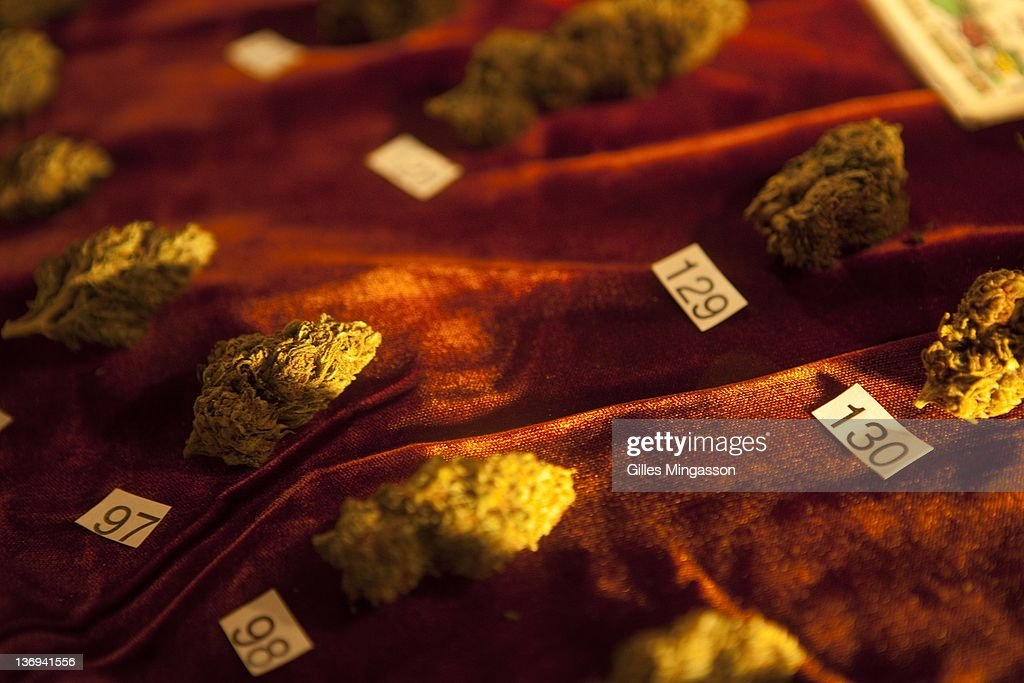 The 136 strands in competition for 'best weed' are on display on December 11, 2010 at the 7th annual Emerauld Cup in Area 101 (name after nearby Highway 101), a new age center where the 7th annual Emerauld Cup is being held. The Oscars of the marijuana world, the Emerald Cup bestows honors on the best medecinal marijuana grown outside (indoor marijuana is not accepted) in the region known as the Emerald Triangle (Mendocino, Humbold and Trinity County), reputed to be the best in the world. 110 growers presented 136 strands, judged on four criterias: appearance, taste, aroma, and potency. A thousand participants attended the festival. Located about four hours north of San Francisco in deeply fotested areas, and bestowed with perfect growing conditions, the Emerald Triangle has become the marijuana capital of the U.S.. Made legal by the Compassionate Use Act, the Emerald Triangle's medecinal marijuana culture generates over 14 billion dollars annualy, about two third of the counties' revenue (photo Gilles Mingasson/Getty Images).