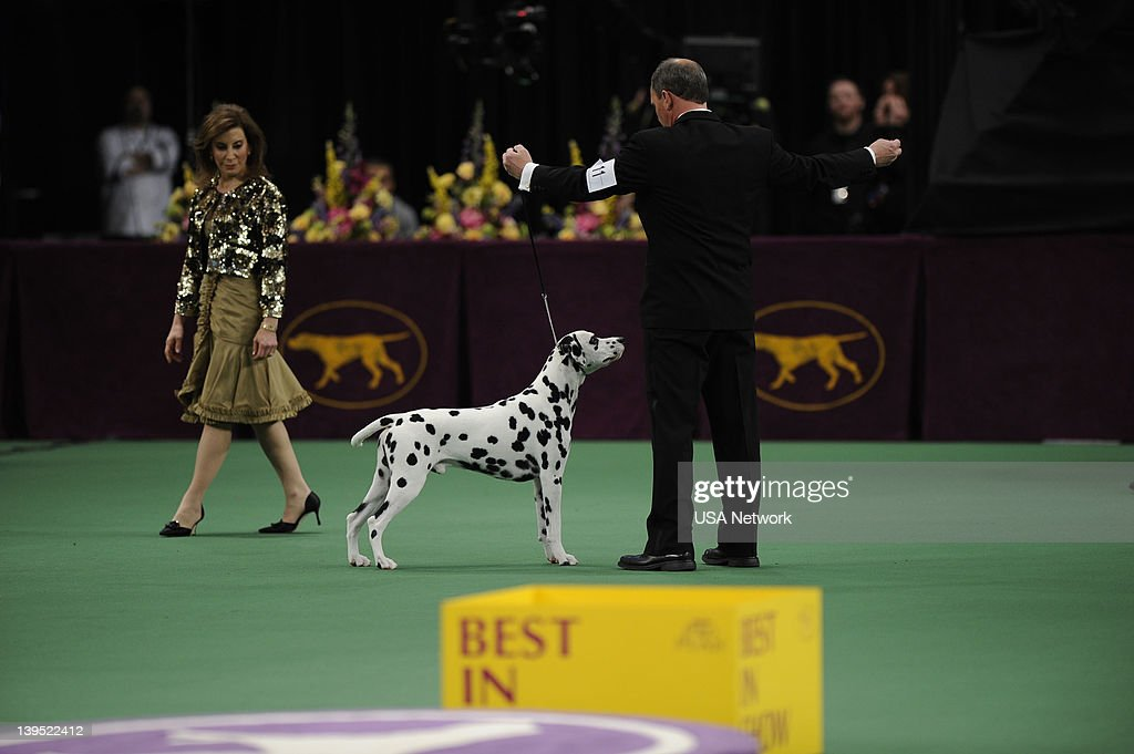 SHOW -- 'The 136th Annual Dog Show on Tuesday, February 14, 2012 in New York City' -- Pictured: Best in Show, Dalmatian --