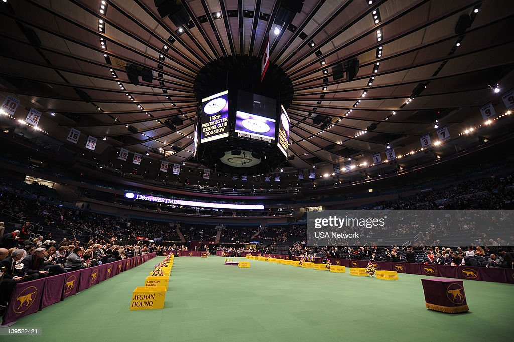 SHOW -- 'The 136th Annual Dog Show on Tuesday, February 14, 2012 in New York City' -- Pictured: Main Arena --