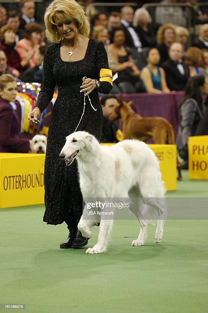 Usa Network 39 S 137th Westminster Kennel Club Dog Show Getty Images
