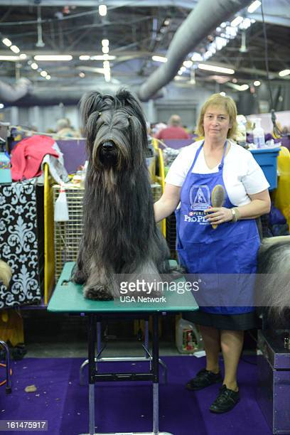 SHOW 'The 137th Annual Westminster Kennel Club Dog Show' at Pier 92 94 in New York City on Monday February 11 2013 Pictured Behind the Scenes