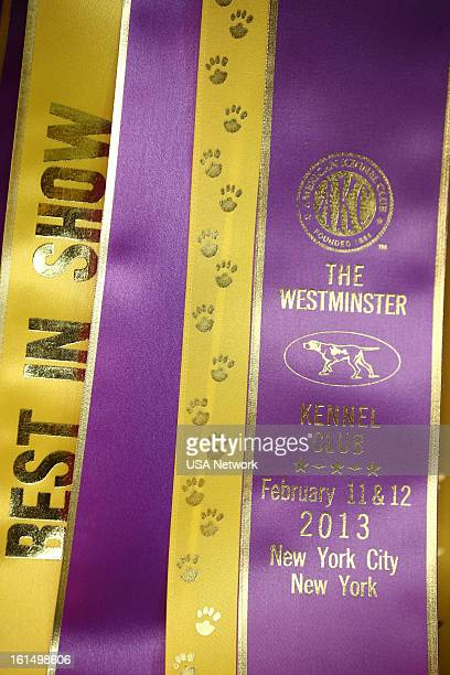 SHOW 'The 137th Annual Westminster Kennel Club Dog Show' Best in Show ribbon at Madison Square Garden in New York City on Monday February 11 2013...