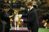 SHOW 'The 138th Annual Westminster Kennel Club Dog Show' Pictured Basenji at Madison Square Garden in New York City on Monday February 10 2014