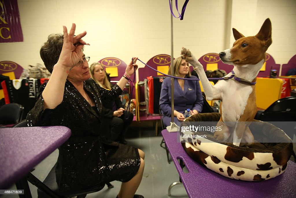 Show 39 The 138th Annual Westminster Kennel Club Dog Show 39 Pictures Getty Images