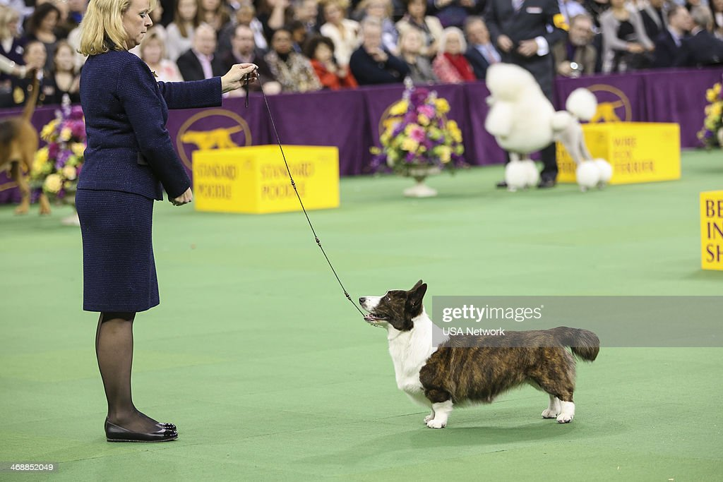 Usa Network 39 S The 138th Westminster Kennel Club Dog Show Getty Images