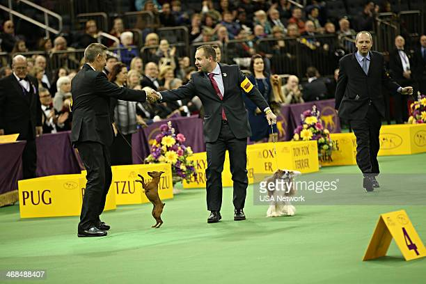 SHOW 'The 138th Annual Westminster Kennel Club Dog Show' Pictured Miniature Pincher Cavalier King Charles Spaniel at Madison Square Garden in New...