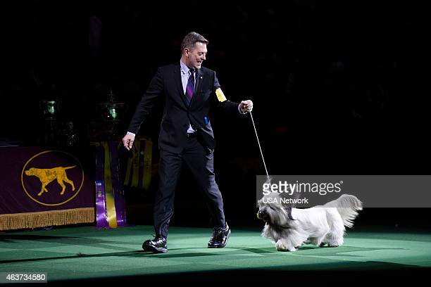 SHOW 'The 139th Annual Westminster Kennel Club Dog Show' at Madison Square Garden in New York City on Tuesday February 17 2014 Pictured Good Time...