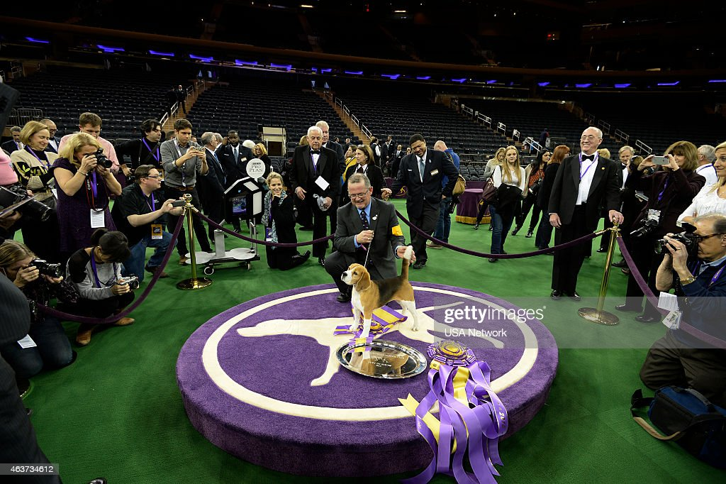 Usa Network 39 S The 139th Westminster Kennel Club Dog Show Getty Images