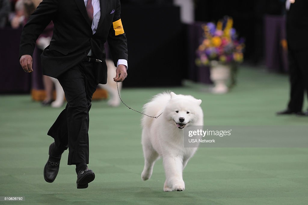 SHOW 'The 140th Annual Westminster Kennel Club Dog Show' at Madison Square Garden in New York City on Tuesday February 16 2016 Pictured Best in Group...