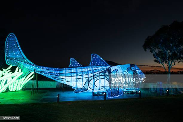 PJ the 20 metre walkthrough Port Jackson Shark installation one of the giant illuminated animal sculptures on display at Taronga Zoo is seen during a...