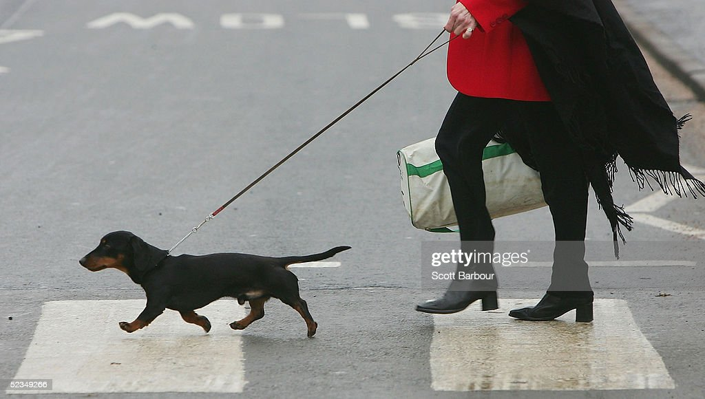 GBR: The 2005 Crufts Dog Show : Stock Photo