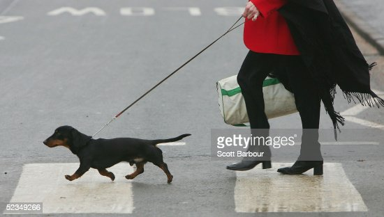 GBR: The 2005 Crufts Dog Show : Photo