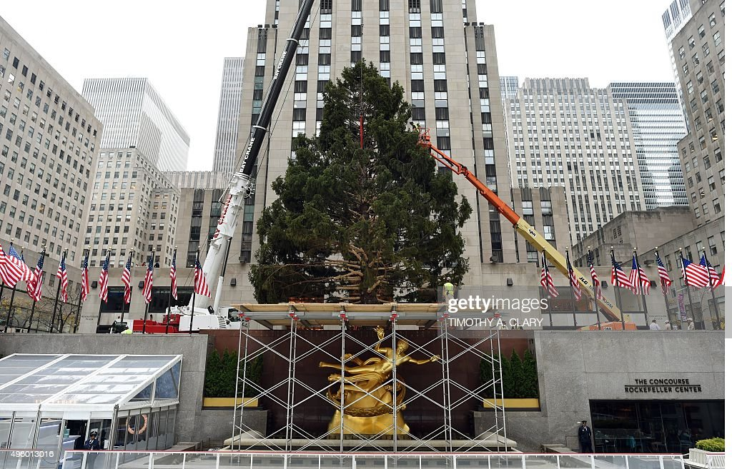 Rockefeller Center Christmas Tree Delivered To NYC Ahead