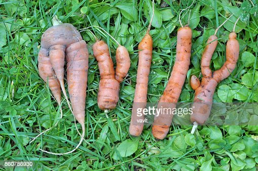 "The abstract word ""MYLLY"" is made from ugly carrots : Stock Photo"
