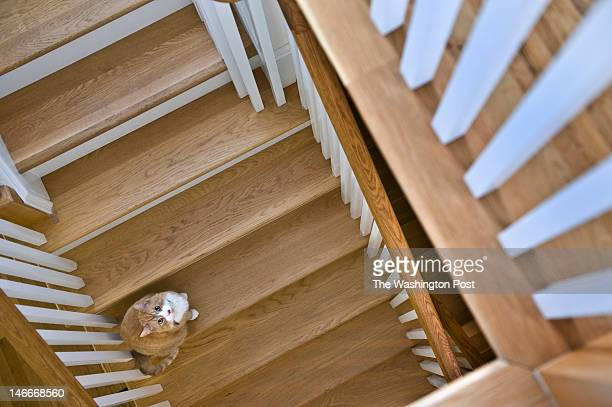 The addition features a staircase that leads to the master bedroom and down to the basement Monday June 11 2012 in Washington DC Curious Toby poses...