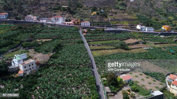 The aerial view taken on September 182017 with a drone shows banana plantations at the Hermigua valley on the Canary Island of La Gomera MARTIN