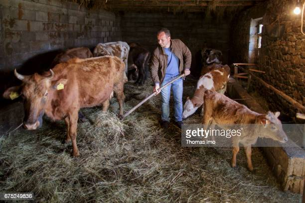 The Albanian farmer Roland Cela mucking out in a cowshed With the support of the GIZ he was able to modernize his farm on March 29 2017 in Kruma...