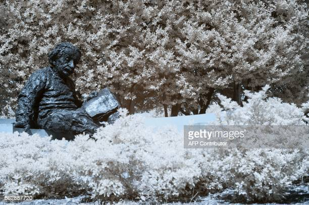 The Albert Einstein monument is seen behind bushes in Washington DC on September 20 2017 / AFP PHOTO / Andrew CABALLEROREYNOLDS