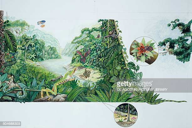 The Amazon rainforest environment and wildlife South America drawing