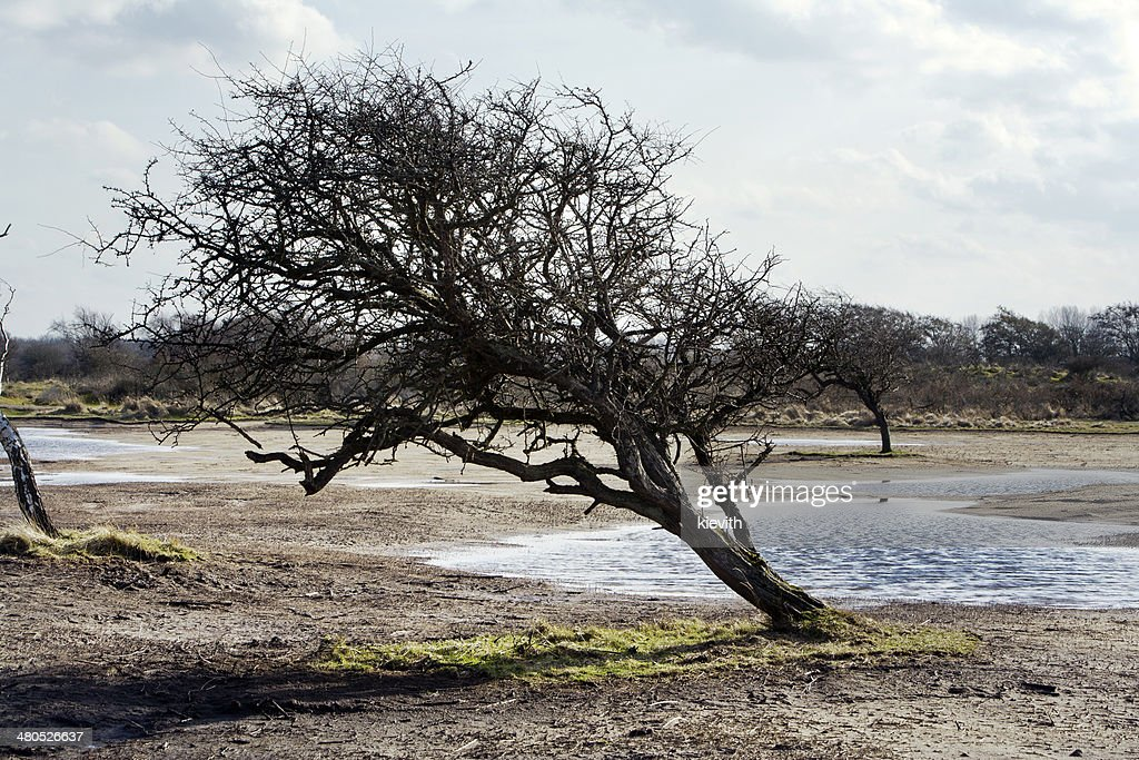 The Amsterdam Water Supply Dunes : Stock Photo
