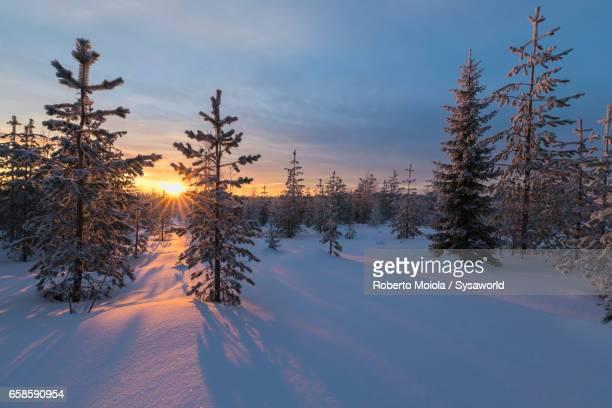 The arctic sunset Vennivaara Rovaniemi Lapland Finland
