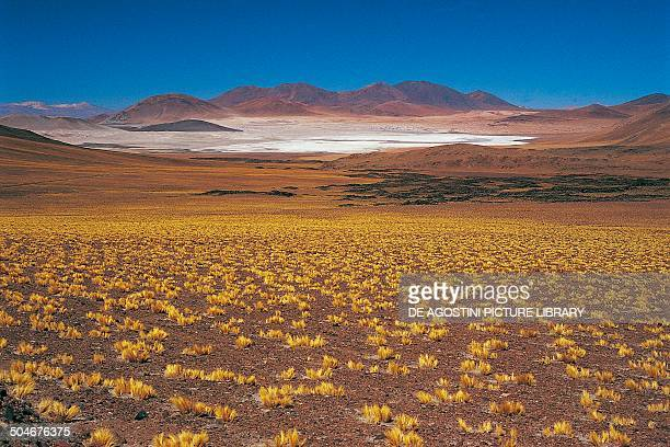 The Atacama Desert near Paso de Laguna Seca Chile