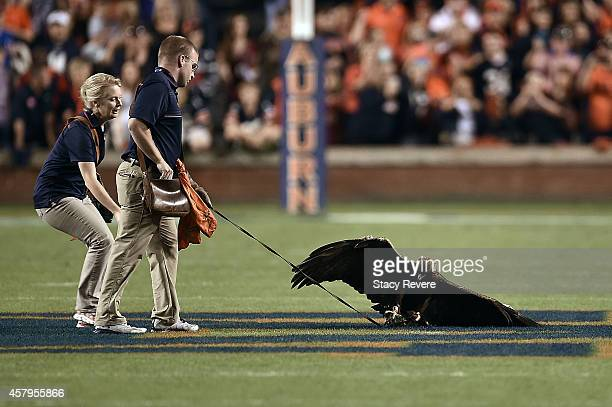The Auburn Tigers golden eagle 'Nova' lands at midfield prior to a game against the South Carolina Gamecocks at Jordan Hare Stadium on October 25...