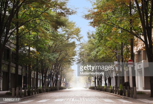 The avenue in Tokyo
