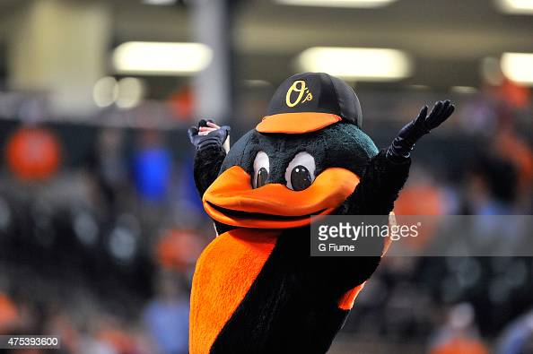 The Baltimore Orioles mascot performs during the game against the Los Angeles Angels at Oriole Park at Camden Yards on May 16 2015 in Baltimore...