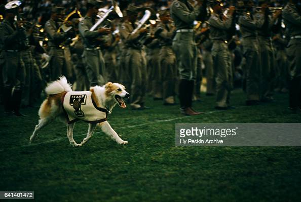 The band and mascot of the ranked Texas AM Aggies is shown on the field before the game against the Maryland Terrapins on September 21 1957 at the...
