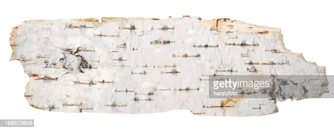 The bark of a birch tree on a white background
