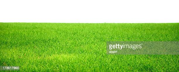 The beautiful lush green grass