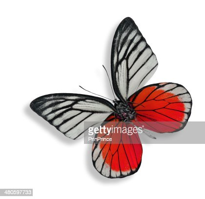 The beautiful red and white butterfly isolated on white backgrou : Stock Photo