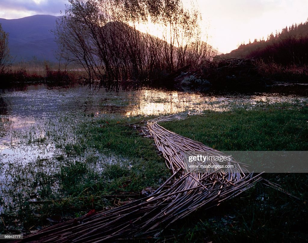 The Beaver Dam : Stock Photo