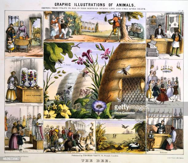 'The Bee' c1851 The central image shows bee skeps and plants on which bees forage and Indian American and South European bees The skep on the right...