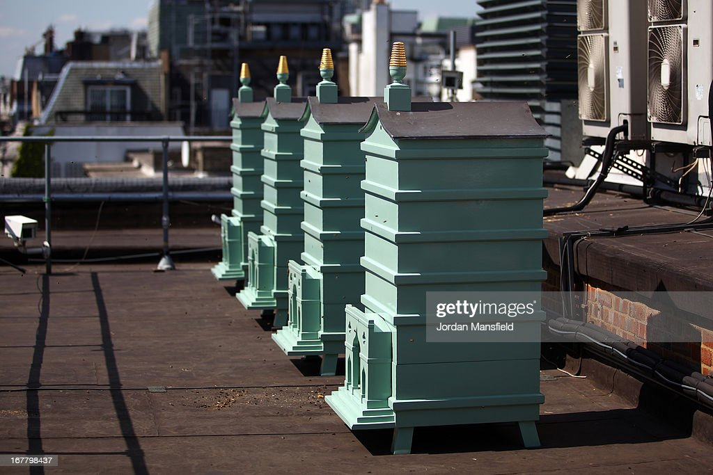 The beehives sit on the rooftop of Fortnum and Mason on April 30, 2013 in London, England. Fortnum and Mason have kept bees on their rooftop terrace for the last 7 years. At this time of year, the London Honey Company return the bees to their renovated hives.