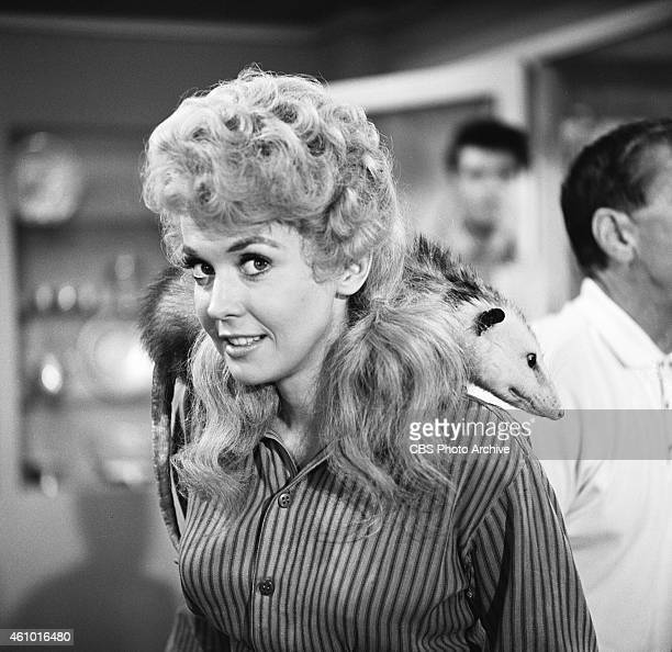The Beverly Hillbillies Donna Douglas as Elly May Clampett for episode The Clampetts are Overdrawn An opossum is poised across her back shoulder...