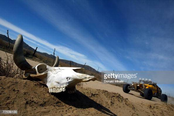 The BF Goodwrench car drives past a cow skull in the desert during the Baja 1000 Race November 20 2003 in Baja California Mexico The race starts in...