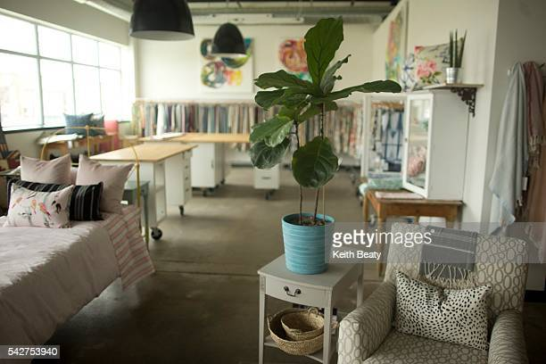 The big plant dilemma Where to get them how to transport them how to keep them alive In this photo we see a Fiddle Leaf Fig plant