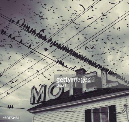 The Bird Motel