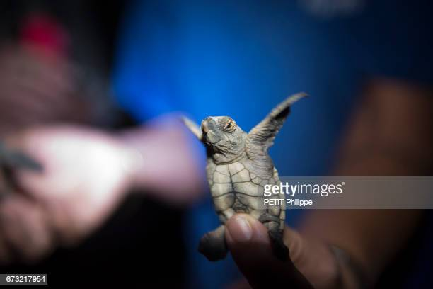 the birth of turtle by Elisa Detrez the winner of the 'Best job in the world' by Tourism Australia travels through the tourist sites of the...