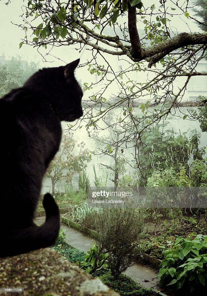 The black cat and the garden : Stock Photo