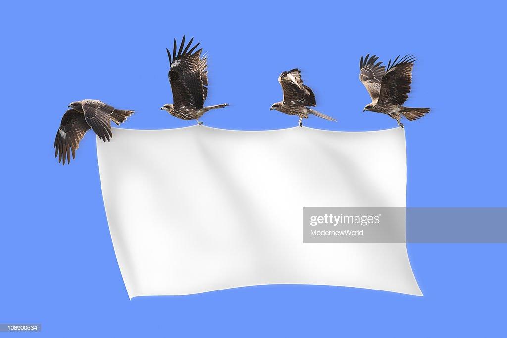 The black kites pulling blank banner