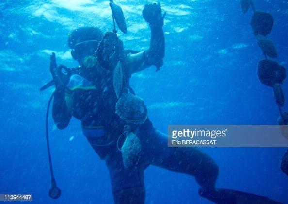 The Black Pearls French Polynesia Tuamutu Archipelago Rangiroa Divers of pearl farm