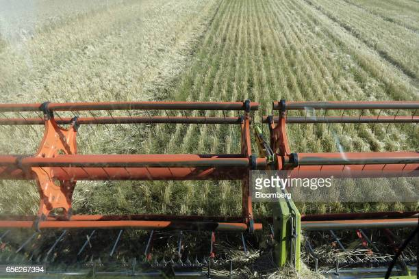 The blades of a a combine harvester cut wheat during a harvest at a farm near Drysdale Australia on Wednesday Feb 15 2017 Wheat shipments from...