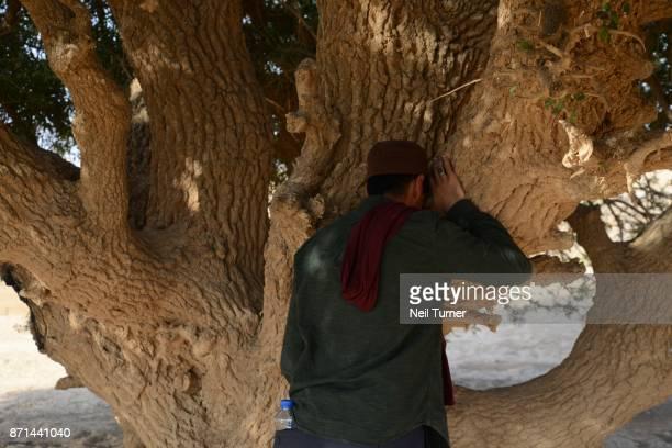The Blessed Tree of The Prophet Mohammed, Jordan.