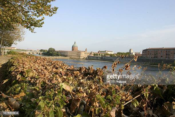 2003 The Bloody Summer La sécheresse sévit en FRANCE tas de feuilles mortes brûlées par la chaleur avec en arrière plan la Garonne entre le pont des...