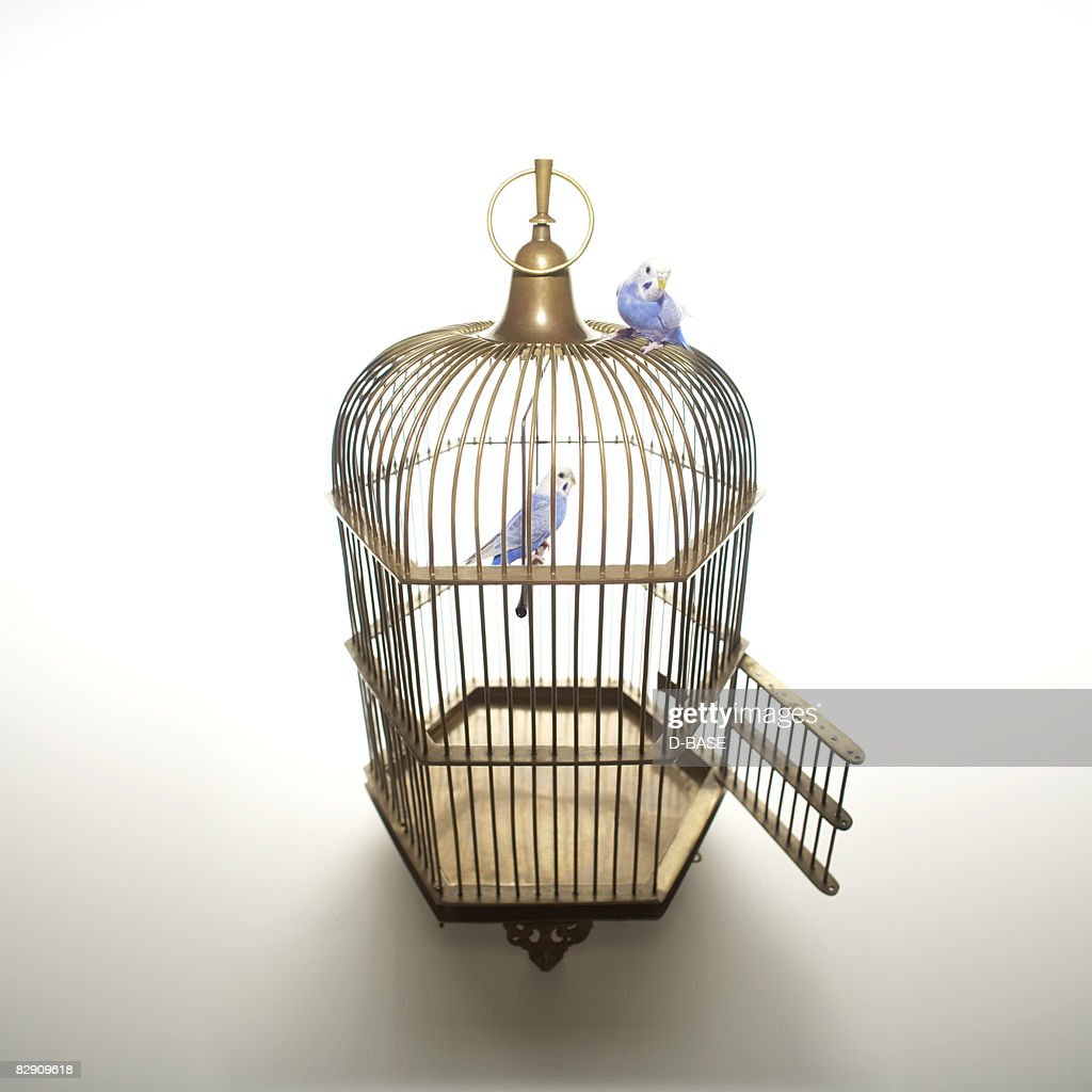 The blue birds on top and in the cage.